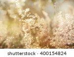 flowers grass blurred... | Shutterstock . vector #400154824