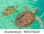 Turtle Swims In The Ocean....