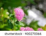 wildflowers | Shutterstock . vector #400270366