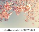 Vintage Cherry Blossom   Sakur...