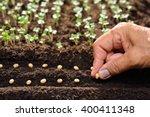 Farmer's Hand Planting Seeds I...