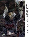 Lemurs Five Colors In Captivity