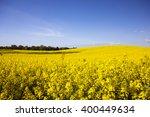 rape field   kashubia  poland | Shutterstock . vector #400449634