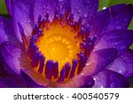 Macro Shot Of Water Lily