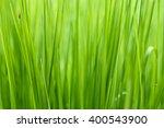 Green Grass Background  Green...
