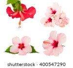 Stock photo set of pink and red pink hibiscus flower isolated on white background 400547290