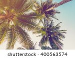 Coconut Palm Tree With Vintage...
