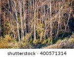 fir trees on a meadow down the... | Shutterstock . vector #400571314