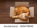 Stock photo ginger cat lies in box on wooden background fluffy pet is going to sleep there 400678840