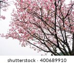 sakura | Shutterstock . vector #400689910