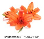 Large Orange Lilies Isolated O...