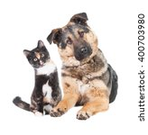 Stock photo funny pair of cat and dog looking into one side isolated on white 400703980