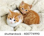 cute kittens | Shutterstock . vector #400774990