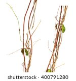 jungle vines isolated on white... | Shutterstock . vector #400791280