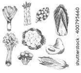 vector vegetable hand drawn... | Shutterstock .eps vector #400795660