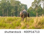 backside of buffalo with trees... | Shutterstock . vector #400916713
