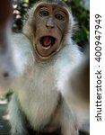 Stock photo monkey taking a selfie trying to steal a camera monkey forest ubud bali indonesia asia 400947949