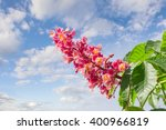 Inflorescence With Flowers Of...