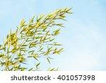 Fresh Vivid Green Bamboo Leave...