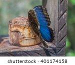 butterfly blue morpho  morpho... | Shutterstock . vector #401174158