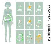 human digestive system  vector... | Shutterstock .eps vector #401219128