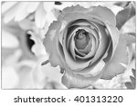 rose picture in black and white | Shutterstock . vector #401313220