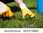 man removes weeds from the lawn ... | Shutterstock . vector #401373883