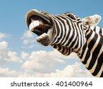 Zebra Striped Happy Laughting...