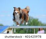 Tricolor Shetland Sheepdog ...