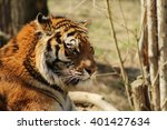 closed up view on a tiger... | Shutterstock . vector #401427634