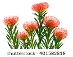 Orange Pincushion Protea Flowers