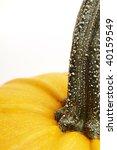 pumpkin | Shutterstock . vector #40159549