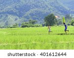Children Playing Kite In Rice...