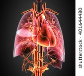 3d Illustration Human Anatomy...
