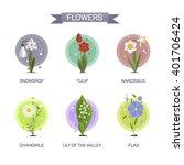 flowers set isolated on white...   Shutterstock . vector #401706424