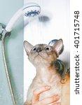 peterbald cat in shower | Shutterstock . vector #401715748