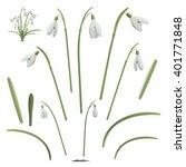 Set Of Snowdrop Flowers...