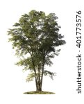 tree isolated on white... | Shutterstock . vector #401773576