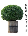 Tree In Wood Pot Isolated On...