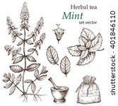 mint   botanical drawing.... | Shutterstock .eps vector #401846110