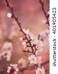 a branch of a blossoming tree... | Shutterstock . vector #401905423