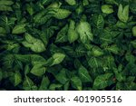 Stock photo green leaf texture leaf texture background 401905516