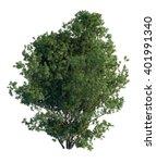 3d illustration pine tree...   Shutterstock . vector #401991340