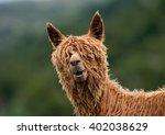 alpaca  | Shutterstock . vector #402038629