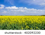 Rapeseed   Landscape Of A...