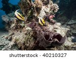 coral and fish | Shutterstock . vector #40210327