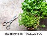 herbs in pots toned photo | Shutterstock . vector #402121600