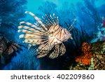 Exotic Tropical Devil Firefish...