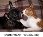 Stock photo friendship love cats and dogs black dog bulldog white cat 402332680
