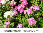 pink and white flower   Shutterstock . vector #402347974